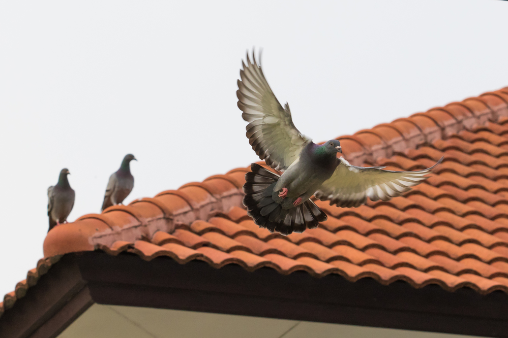 Bicho no telhado: descubra o que fazer para evitar esse problema